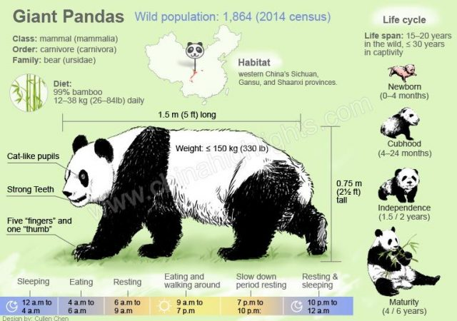 Pandas 12 Interesting Facts You Should Know